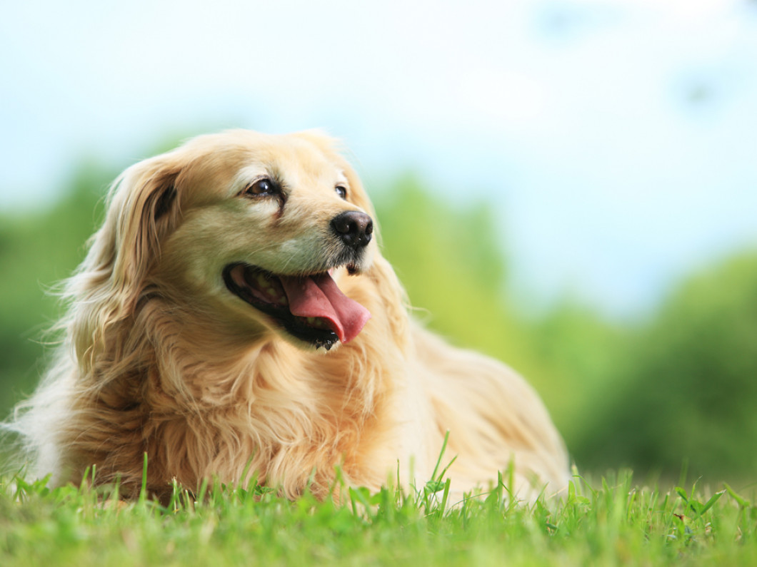 Pamper Your Pet in Texarkana, AR